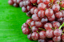 Bunch Of Red Grapes , Isolated On Banana Leaf Background . , Close Up , Focus Sharp Specific Point