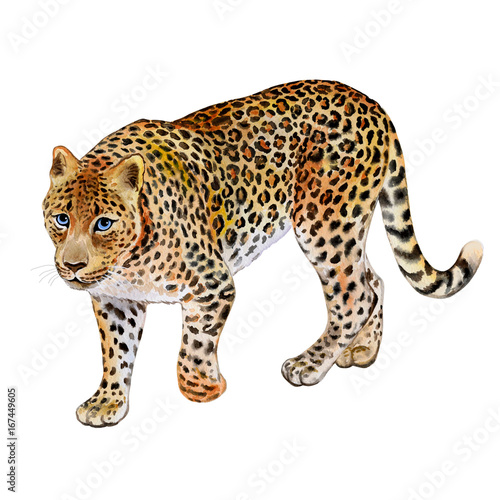 Deurstickers Luipaard Leopard on a white background. Watercolor. Illustration