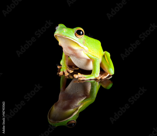Spoed Foto op Canvas Kikker Reflected green tree frog