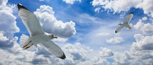 Seagulls Flying On A Cloudy Blue Sky