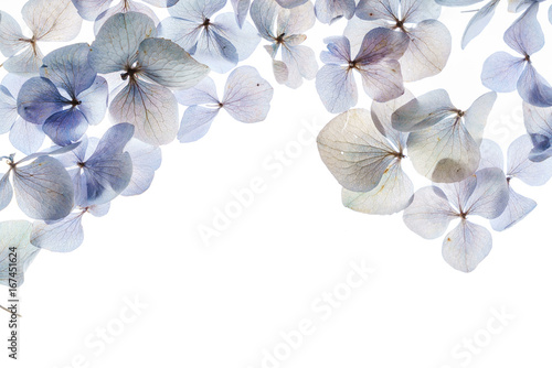 Stickers pour porte Hortensia floral composition