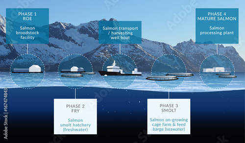 Salmon Farming Production Infographic - Aquaculture in Norway Wallpaper Mural