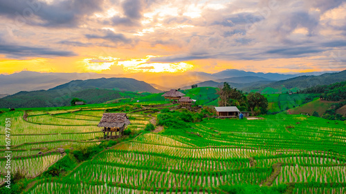 Deurstickers Groene Rice fields in Chiangmai, Thailand