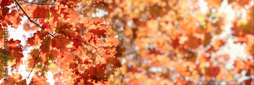 Autumn leaves (lush foliage) in forest lit by sunlight