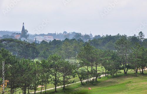 Foto op Canvas Pistache Pine trees on the hill