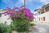 Fototapeta Kwiaty - Halbinsel Premantura auf Istrien