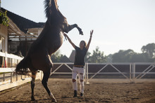 Woman Training Horse While Sta...