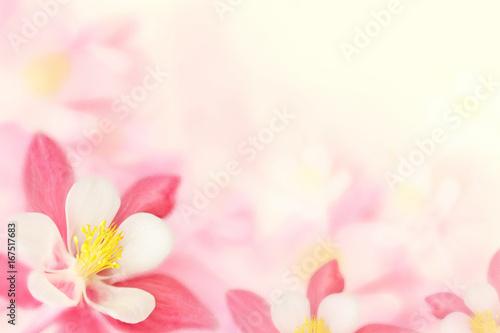 Fotografia Background - pink flowers