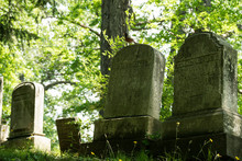 Shady Grave Stones In A Forest...