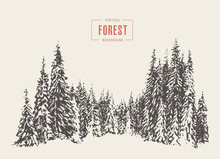 Pine Forest Vector Illustratio...