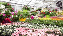 Large Greenhouse With Beautifu...