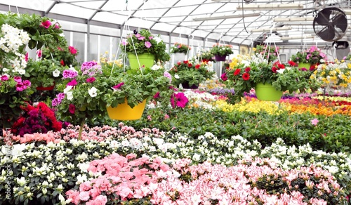 Obraz na plátne large greenhouse with beautiful flowers and plants for sale in t