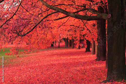 Garden Poster Red autumn tree in the park