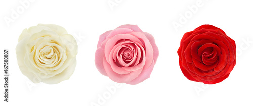 Cadres-photo bureau Roses Coral rose flower. Detailed retouch