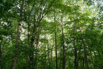 爽やかな森の朝