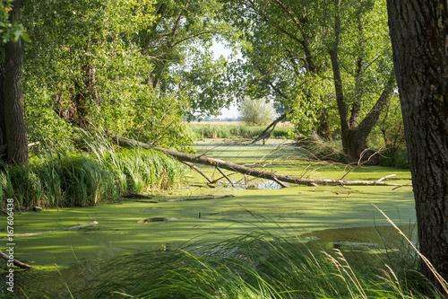 Fotografía swampland at river's  delta in Slovakia in summer