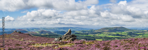 Poster Heuvel View from the Stiperstones to Corndon hill, with rock formations, and heather in flower, summer. Shropshire, UK.