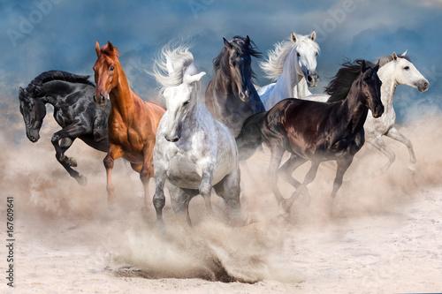 Stado koni w burzy piaskowej pustyni