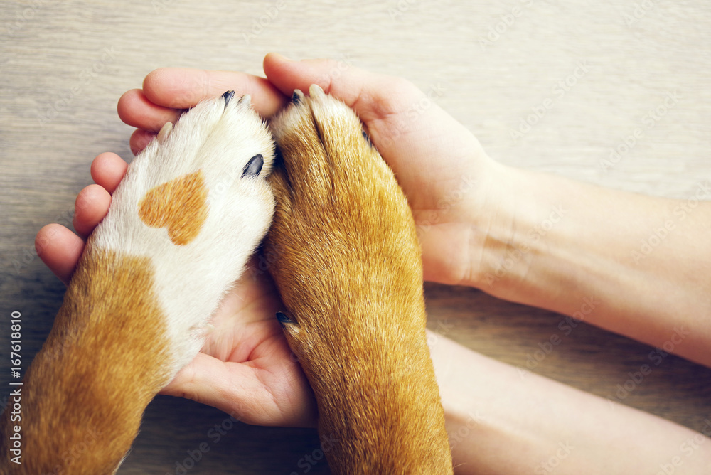 Fototapeta Dog paws with a spot in the form of heart and human hand close up, top view. Conceptual image of friendship, trust, love, the help between the person and a dog