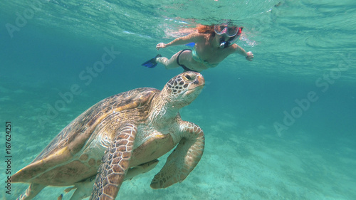 In de dag Schildpad The girl is swimming next to the sea turtle. Red sea. Marsa Alam