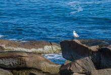 Solitary White Seagull On Jagged Rocks In The Atlantic Ocean At Cape Ann, Massachusetts