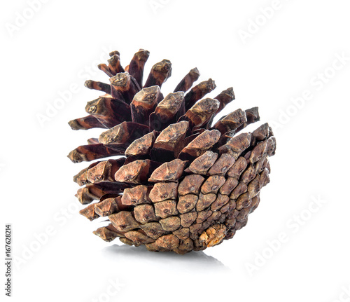 Fototapeta brown pine cone isolated on white background