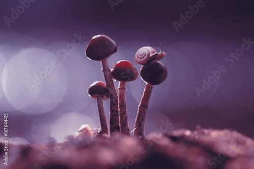 snail, mushroom, macro