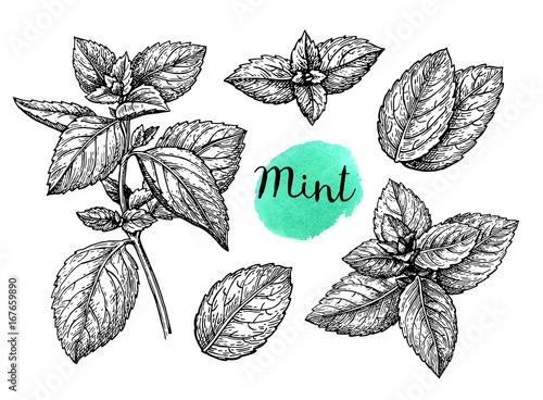 Obraz Mint sketch set - fototapety do salonu