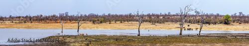 Foto op Plexiglas Zuid Afrika Sable dam landscape in Kruger National park, South Africa