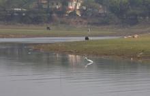 Crane Bird On The Damdama Lake (January 2017) Near Gurgaon, Haryana (India)
