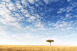 Fototapeta Sawanna - Lone acacia tree in the Masai Mara