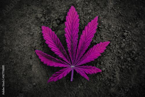 Photo  marijuana  background. bush cannabis.