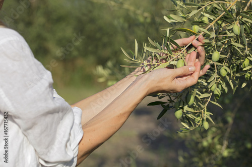 Tuinposter Olijfboom Young girl holding in hands fresh olive on the tree.