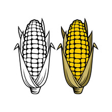 Logo And Symbol Of Corn For Thanksgiving Day