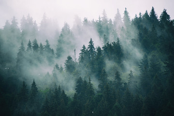Naklejka Misty landscape with fir forest in hipster vintage retro style