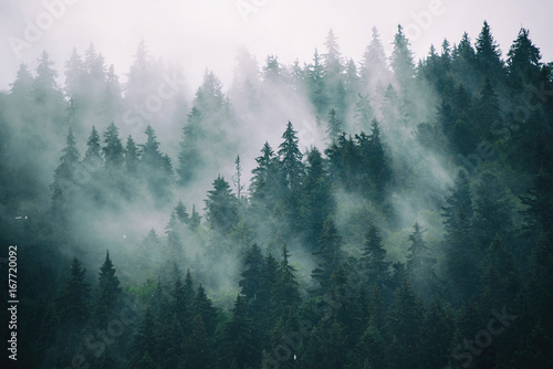 Foto op Plexiglas Wit Misty landscape with fir forest in hipster vintage retro style