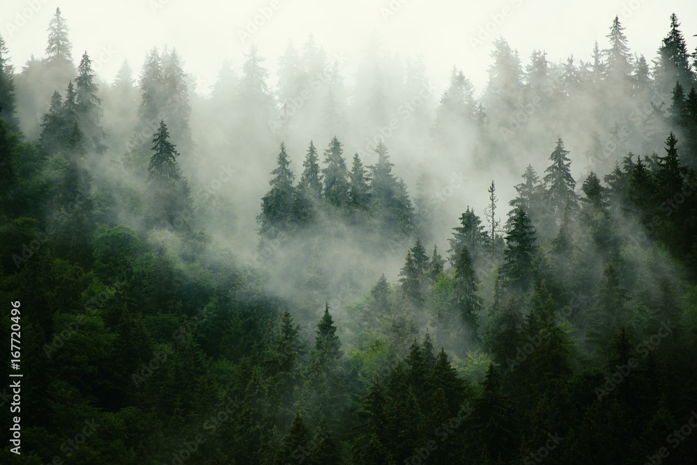 Fototapety, obrazy: Misty landscape with fir forest in hipster vintage retro style