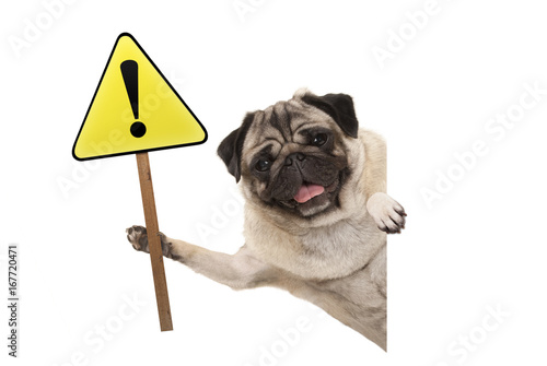 Photo  smiling pug puppy dog holding up yellow warning, attention sign with exclamation