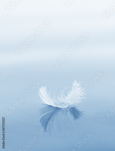 Photo  downy feather on a water surface