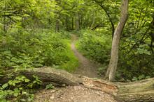 Summer Hiking Trail / A Hiking...