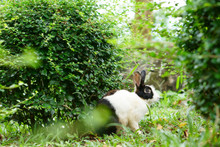 Wild Rabbit In Bush Or Tree And Green Grass Nature In The Garden Or Jungle For Animal Life Background