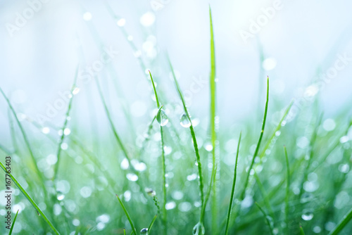 fresh-wet-grass-in-the-early-morning