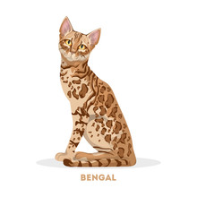 Isolated Bengal Cat.