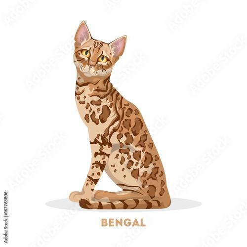 Isolated bengal cat. Wallpaper Mural