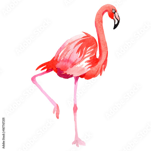 Foto op Aluminium Flamingo Sky bird flamingo in a wildlife by vectorr style isolated. Wild freedom, bird with a flying wings. Aquarelle bird for background, texture, pattern, frame, border or tattoo.