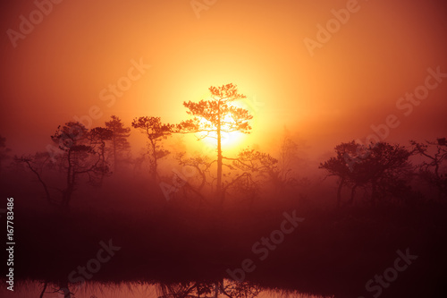 A beautiful, dreamy morning scenery of sun rising above a misty marsh. Colorful, artistic look. Vibrant swamp landscape in North Europe.