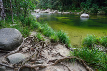 Green Water Of The Mossman River Running Through The Daintree Rainforest In Far North Queensland