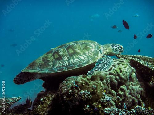 In de dag Koraalriffen Die Unterwasserwelt des Komodoarchipels - Kleine Sundainseln - Indonesien