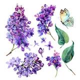 Fototapeta Kwiaty - watercolor Collection of Purple Lilac.