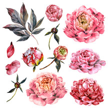 Watercolor Collection Of Pink Peonies.